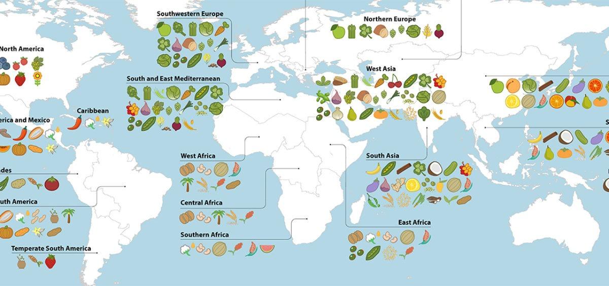 Carte fruits et légumes - Guillaume Sciaux - Cartographe professionnel