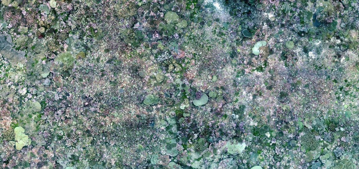 Carte répartition coraux couv - Guillaume Sciaux - Cartographe professionnel